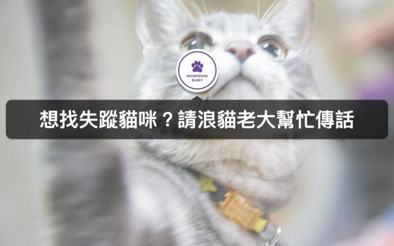 貓咪走失時剪刀找貓法是找貓方法之一?!