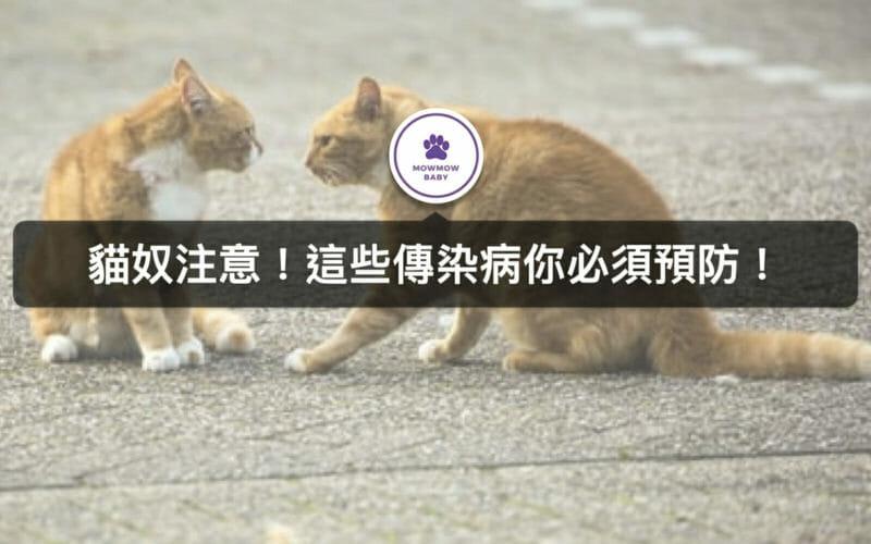 貓咪生病了!貓咪常見4大傳染疾病有哪些?