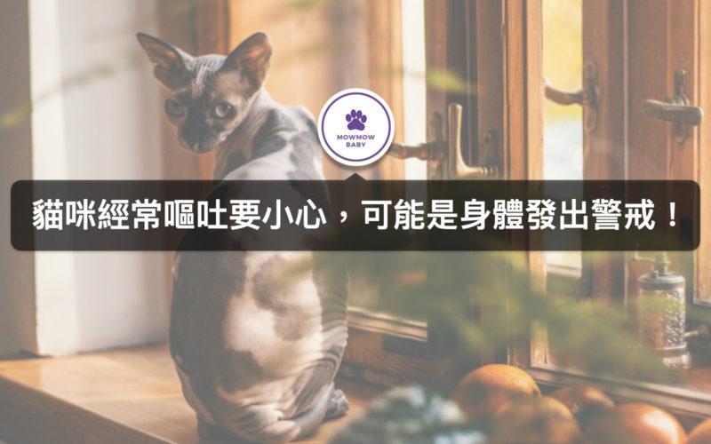 貓咪經常嘔吐,難道是貓生病了?貓經常嘔吐常見三大原因!
