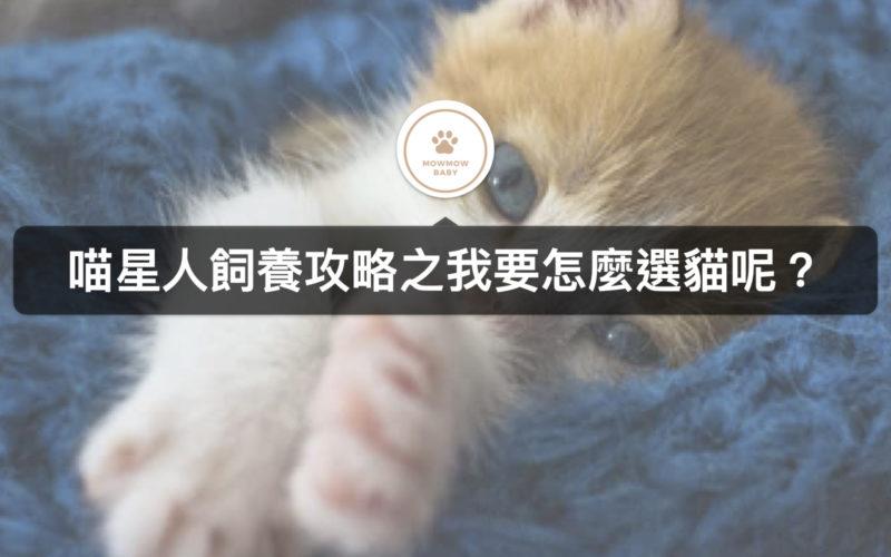 貓咪飼養得用購買的方式?到收容所領養貓也是不錯的選擇!