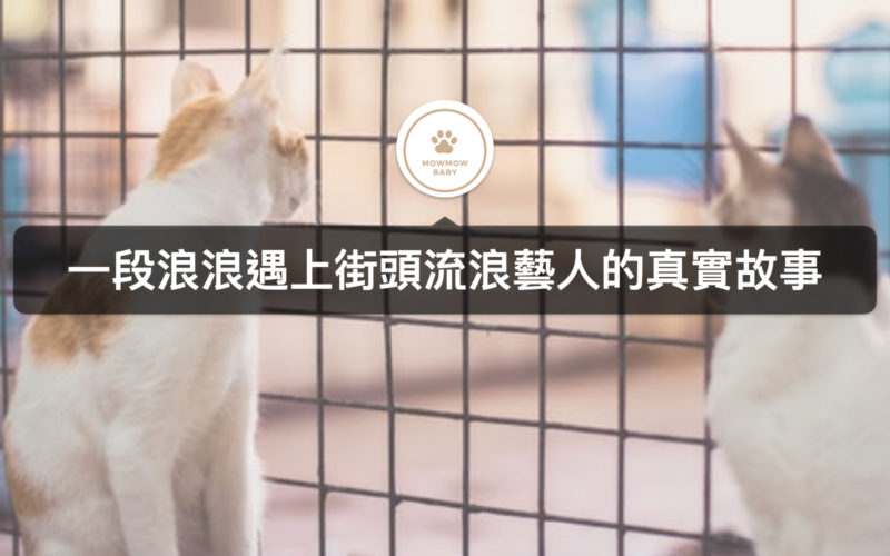【寵物與我】一段與流浪貓相遇的故事,遇見你讓我感受到失去已久的親情!