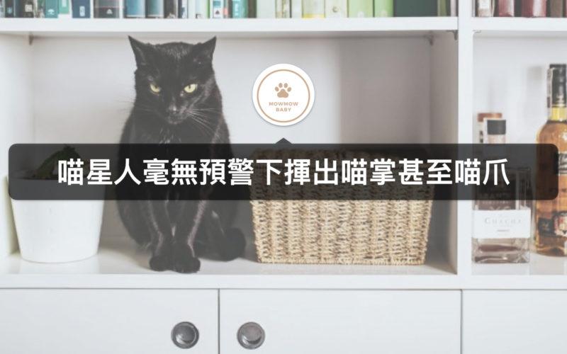 貓咪飼養|貓攻擊人的行為該如何去改善呢?