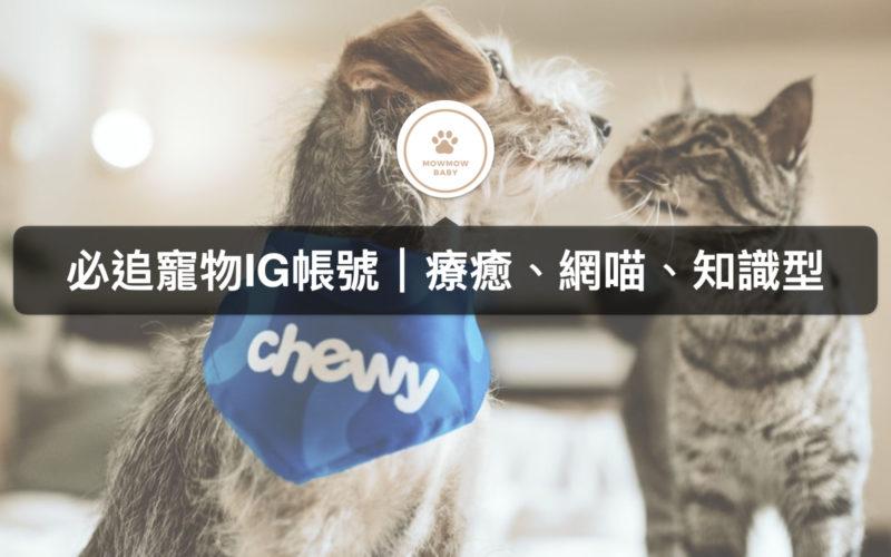 喵星人集合之貓IG帳號推薦 手繪、網喵、知識型你喜歡哪個類型?