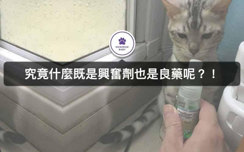 木天蓼跟蟲癭果有什麼關係?!當貓咪食慾不振時使用能改善?