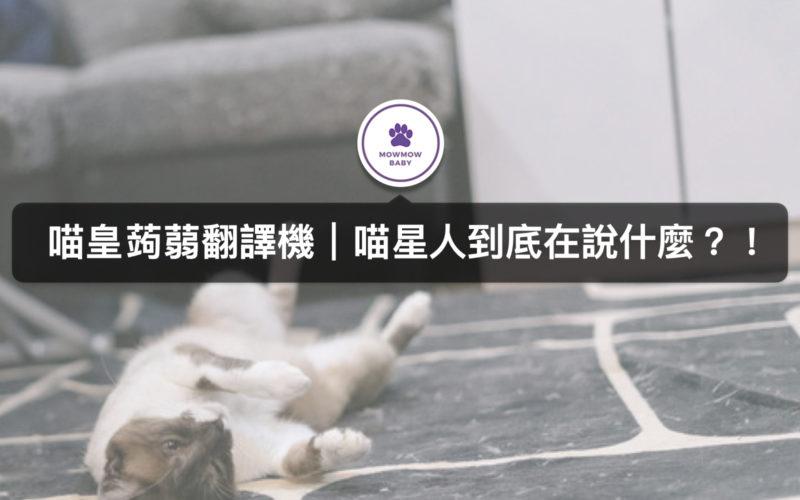 喵喵喵是貓在說話嗎?!常見五大貓語
