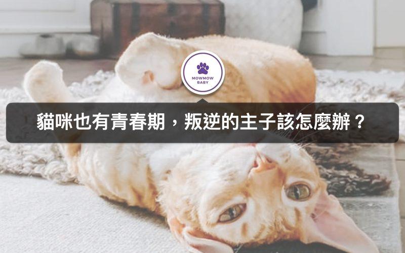 貓咪叛逆期居然會做任性事! 小心處理才能跟寵物貓咪和平相處