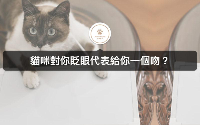 貓眨眼是在跟示愛嗎?貓眼瞳孔變化代表著不同意義!