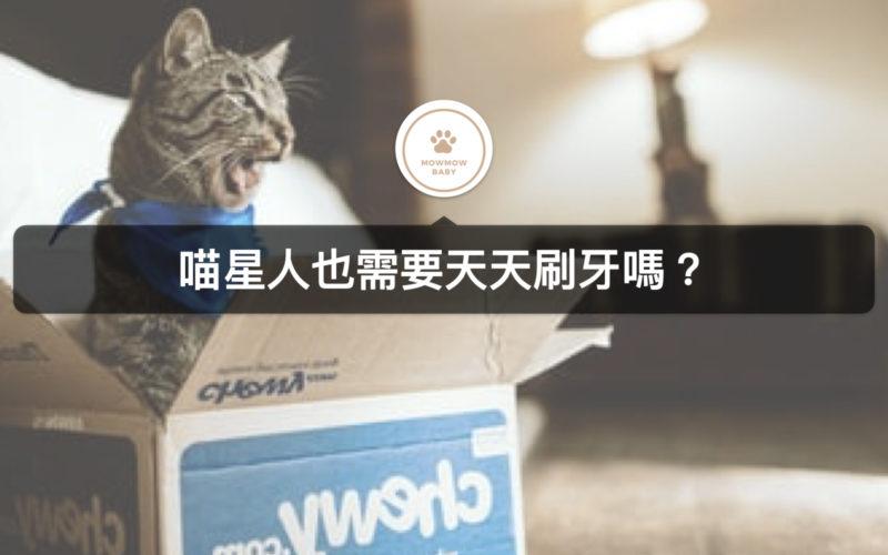 【貓口腔保健】貓需要刷牙嗎?貓常見的口腔疾病竟然是牙周病!