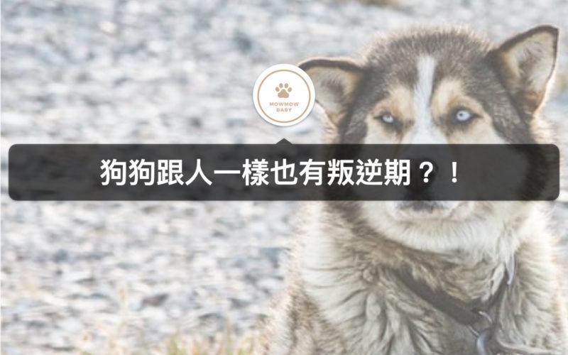 狗狗叛逆,青春期性情大轉變,我該怎麼辦? 狗狗叛逆期的三種症狀