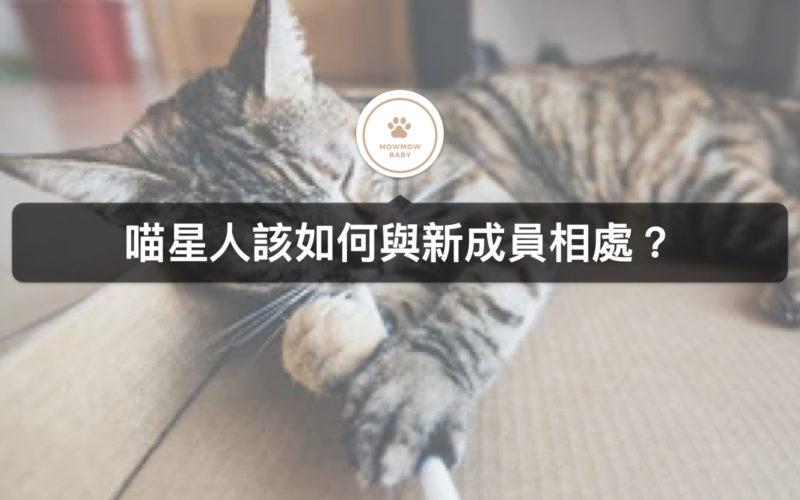 飼養貓時,新貓加入,該如何度過磨合期?