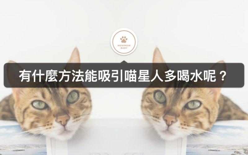 如何讓貓多喝水?改掉貓不喝水的習慣!