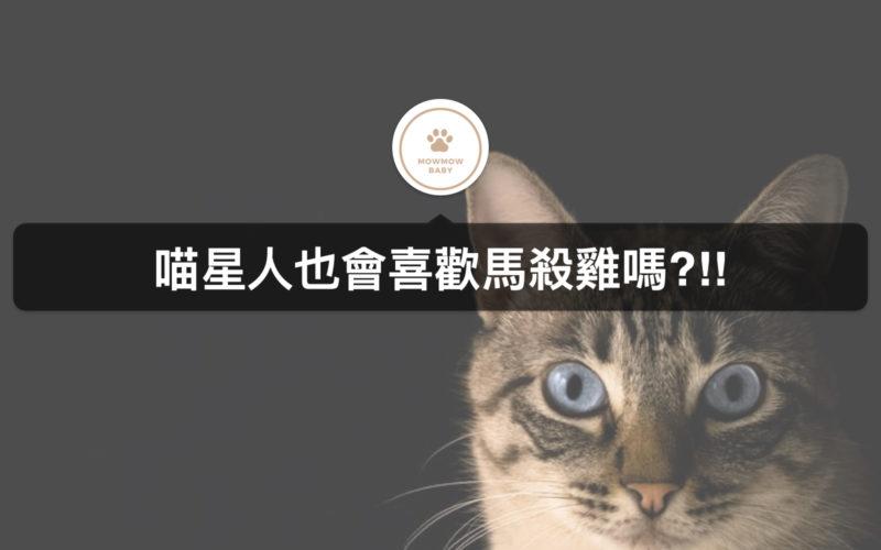 貓咪按摩有什麼技巧嗎?幫貓按摩還可以促進血液循環!