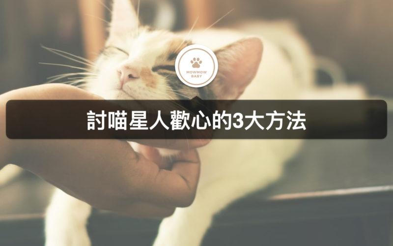 貓咪飼養|如何讓貓喜歡你?利用貓喜歡的玩具有用嗎