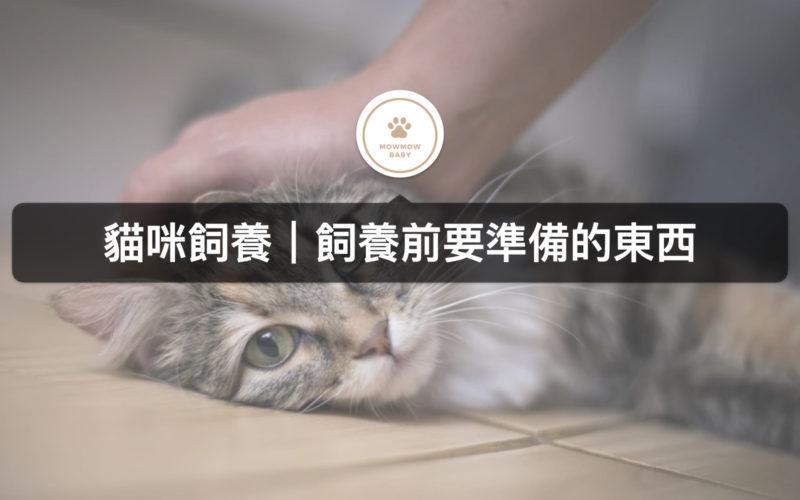 【新手養貓】飼養貓之前需要先準備哪些東西呢?!