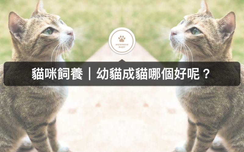 飼養貓時幼貓成貓到底該選哪個好?在貓訓練上有何區別?