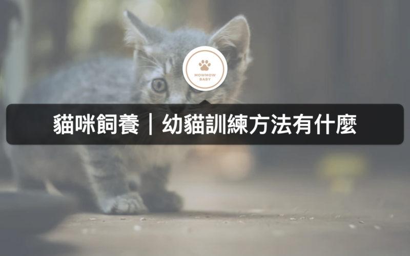 幼貓飼養,關於幼貓教導該注意的事項有哪些?