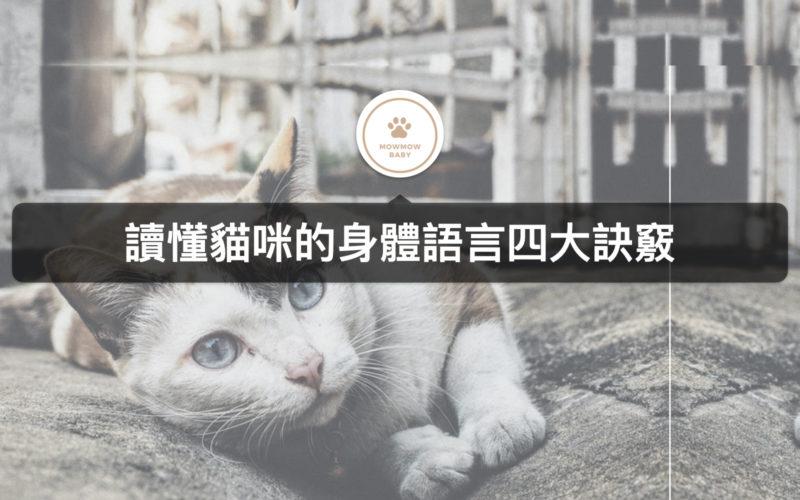 貓咪飼養|如何讓貓愛喝水呢?
