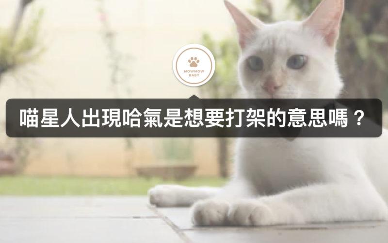 貓咪飼養|當貓出現哈氣行為,是有什麼原因以及該如何解決呢?