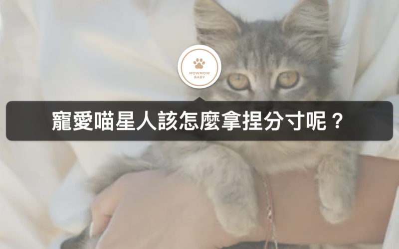 貓咪飼養|寵貓也不要寵過度,變成溺愛可就不好了!!!