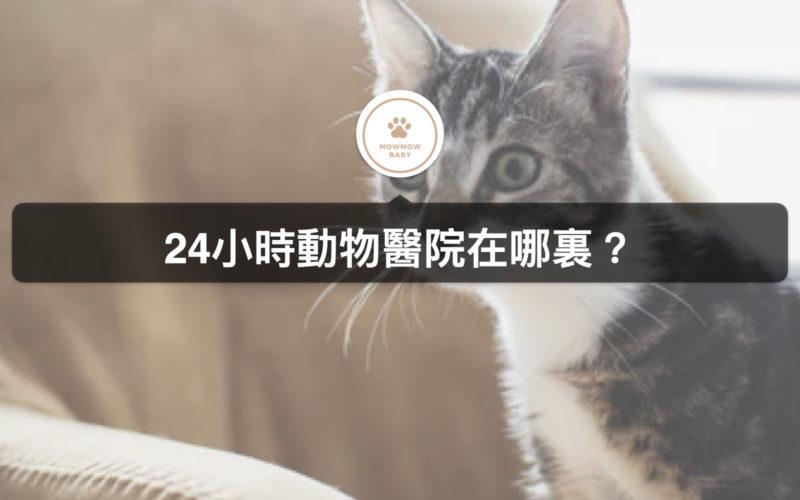 24小時動物醫院上哪找?!寵物生病等不了,夜間寵物醫院報給你知!
