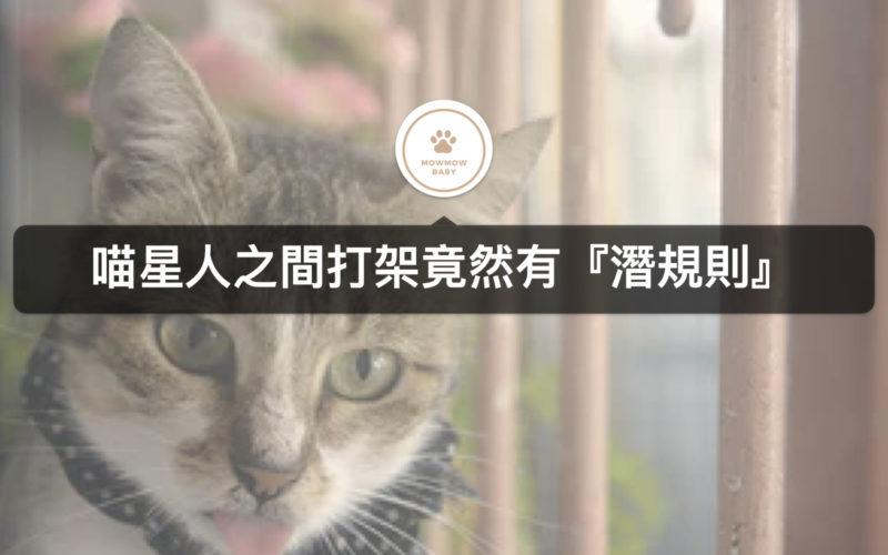 貓咪行為|貓打架還是在玩耍,沒想到有潛規則?!!
