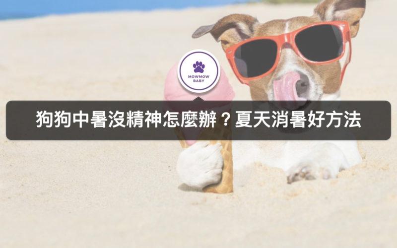 狗狗曬太陽會中暑嗎? 中暑會有什麼現象? 我該去醫院嗎? 三招消暑最有效